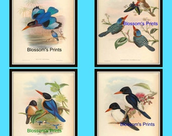 Set of four vintage bird prints. Plates 29,30,31 and 32