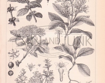 Antique Flower and Fruit Lithograph - Flower and Fruits Print from 1890
