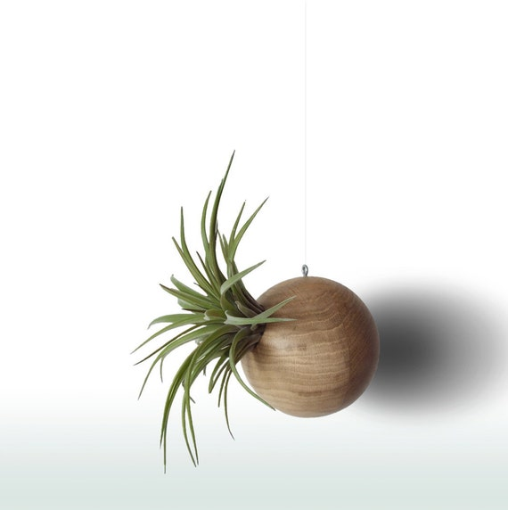 Geometric terrarium macrame wall haning air plant holder for Geometric air plant holder