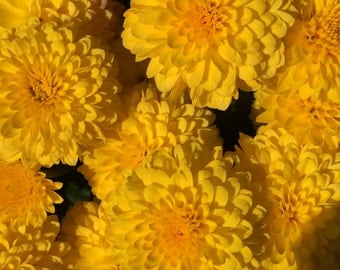 Yellow Flowers 3x5 Matted Photo