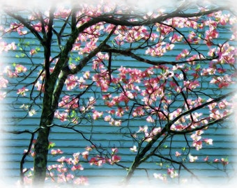 Pink Spring Blossoms #163