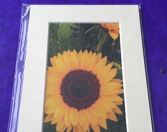 Mounted Sunflower Photo Portrait