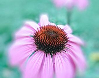 Echinacea (Print/Wrap)