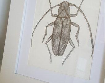A5 Hand drawn Longhorn beetle, Scientific Illustration, Entomology
