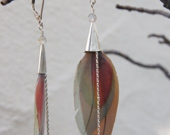 Multi Macaw Feather Earrings