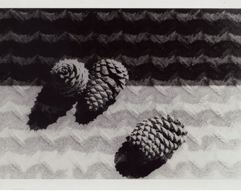 Composition with Pine cones - Photograph