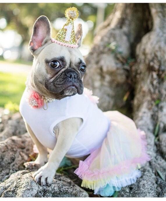 Pet Party Decor || Dog Birthday Hat || Dog Birthday || Dog Party Hat || Pet Cat Kitty Puppy Birthday Party Hat || Dog Clothes || Dog Costume