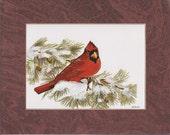 PRINT Red Cardinal On Pine Limb
