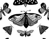 Butterflies / A4 Print Poster Artwork / Insect entomology board / Indian Ink drawing / Black and white