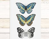 Lepidoptera Vol.2 - large wall hanging, wood trim and printed on textured cotton canvas. Vintage Science Posters