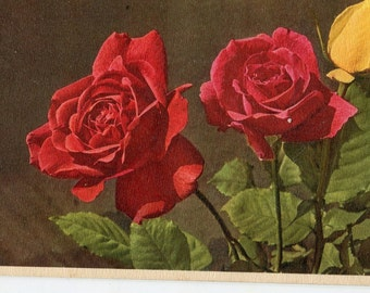 Vintage postcard, Red Roses, yellow rose vintage  Postcard,  Swiss postcard vintage postcard, SharonFosterVintage