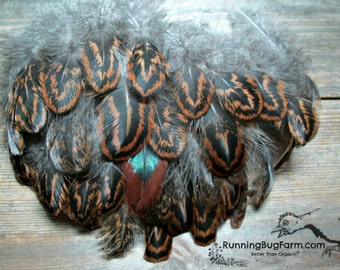 """Real Bird Feathers Cruelty Free Real Feathers Partridge Cochin Hen Plumes Brown Black Feathers Real Feathers For Crafts 25 @ 3 - 3.5"""" / PC8"""