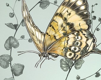 butterfly art print -  butterflies giclee print -  yellow - green - turquoise - COLOR - blue - home decoration - childrens art