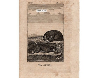 1808 ANTIQUE OTTER ENGRAVING - original antique animal print engraving