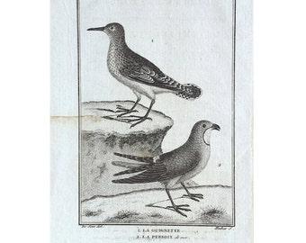 1775 ANTIQUE BIRD ENGRAVING - buffon bird rare original antique print ornithology engraving - wading and shore birds