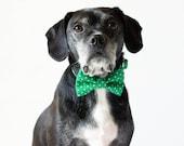 Kelly Green Dot Dog Bowtie Collar