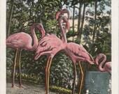 Flamingos- 1930s Vintage Postcard- Mountain Lake Sanctuary- Lake Wales, FL- Florida Wildlife- Near Singing Tower- Paper Ephemera- Used