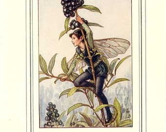The PRIVET FAIRY Vintage Book Plate Original Page c. 1940 Book of the Flower Fairies Cicely M Barker