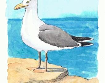 Watercolor Herring Gull Illustration