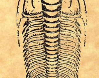 Paradoxies Trilobite Rubber Stamp