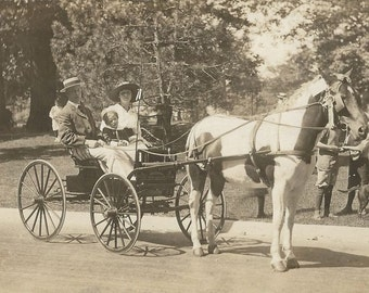 Toronto Horse Show - Antique 1910s Silver Gel Prizewinning Pinto Carriage Mare Real Photo Postcard