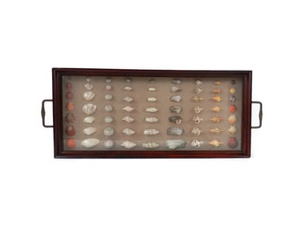 Seashell Specimen Shadowbox Wooden Butler or Tea Tray with Brass Handles
