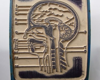 Large anatomy school stamp: human head