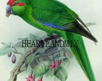 Green Parrot vintage digital art graphic image download printable