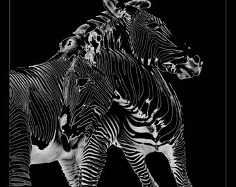 Large Art ~ Zebra Photography ~ Black and White Photography ~ Dark Art ~ Abstract Negative Photo, Fine Art Print, Home Decor Animal Wall Art