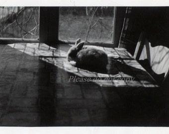 Vintage Snapshot Photo ~  Pet Bunny Rabbit