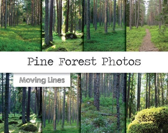 """Pine Forest Photos, Landscape Photography, Mystic Wall Hanging, Woodland Backdrop, Moss, Trees, Woods Outdoors 12x12"""" JPG File"""