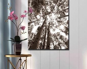 Sepia brown aspen tree ttunks sky photography canvas print nature home decor photograph wall decor living room warm bedroom wall art