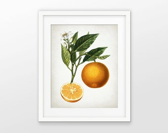 Orange Art Print - Orange Fruit Illustration - Orange Decor - Kitchen Decor - Orange Fruit Print - Single Print #1718 - INSTANT DOWNLOAD