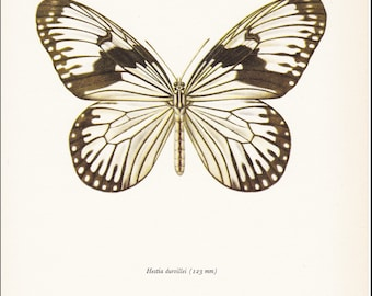 vintage butterfly insect art print Hestia Durvillei white dark rimmed wings home decor 8x10 inches