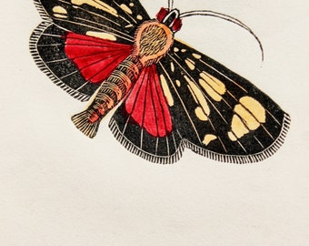1843 Antique Moth Print, Hand Coloured - Euphemia Moth