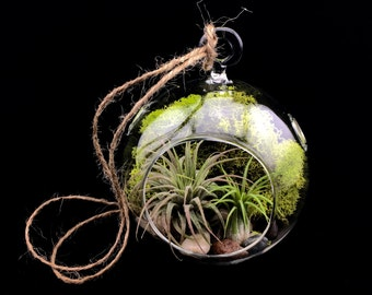 Terrarium Kit, Air Plant Terrarium, Air Plant, River Stones, Glass Orb