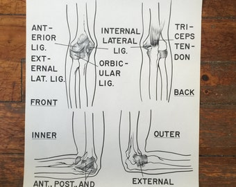 Ligaments of the Right Elbow Coutroom Anatomy Chart
