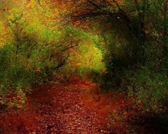 Autumnal landscape photography fallen red leaves serene forest golden light  warm foliage red orange leaves fallRed room decor   Etsy. Red Room Decor. Home Design Ideas