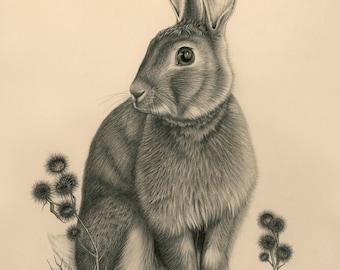 Bigwig the Wild Rabbit (8x10 Giclee print)  by: Melissa Crook