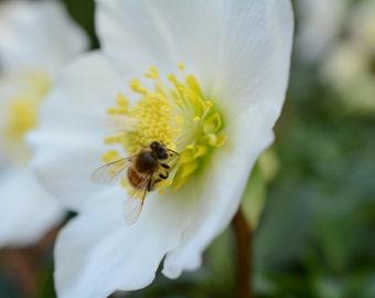 White Flower & Bee