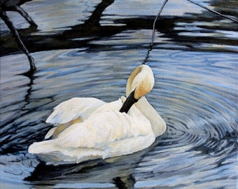 Swan 1 on Black,  12 x 16 in., original acrylic painting,  by Roxanne Thompson