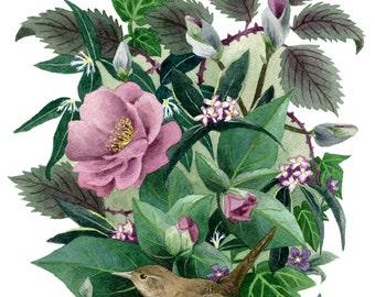 Fine Art Print of Original Watercolor Painting - Garden Wren
