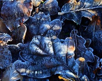 Frosty Morning Digital Download