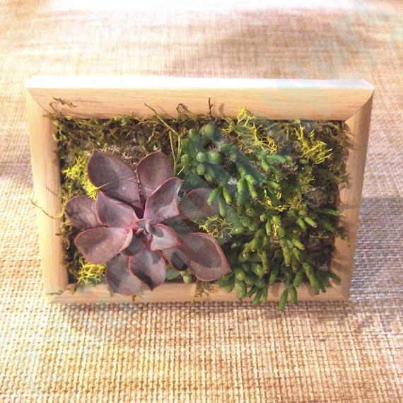 Living Succulents Wall Vertical Garden Small Spaces Garden