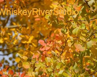 Fall Aspen Leaves print. Autumn, Canvas photo print. Canvas Photography. Wall Art. 8x10, 11x14, 16x20, 20x24.