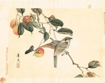 """1894, Japanese Woodblock print, antique, Matsumura Keibun, """"Bull-headed shrike"""""""