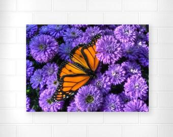 Butterfly Art - Nature Art - Autumn Decor - Nature Photography - Flower Art - Botanical Wall Decor - Original Photo - Fine Art - Home Decor