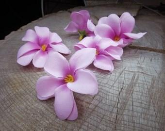 Frangipani Flowers ~100 pieces #100728