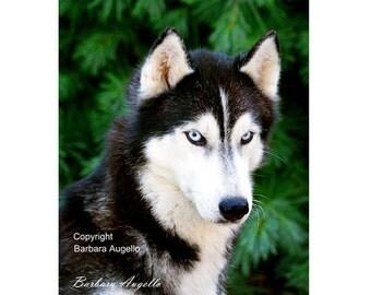 Siberian Husky Flag, Siberian Husky Gift, Siberian Husky Art, Siberian Husky