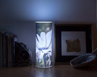 Photo light, luminary of an Osteospermun called Silver Sparkler